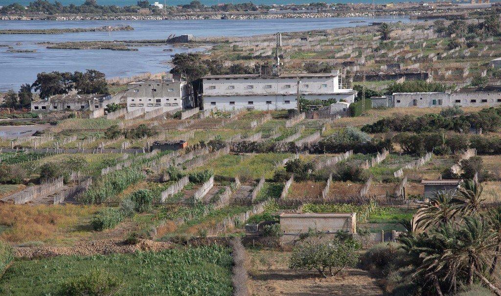 Photo : FAO/Abdelhakim Aissaoui Système agricole de Ramli dans les lagunes de Ghar El Melh, Tunisie
