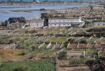 Système agricole de Ramli dans les lagunes de Ghar El Melh, Tunisie