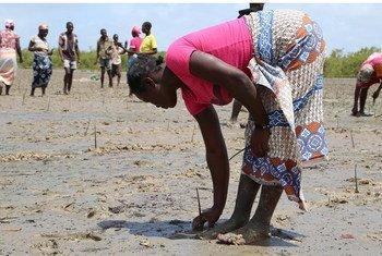 Un an après le cyclone, les femmes sont au centre des efforts de reconstruction des moyens de subsistance.