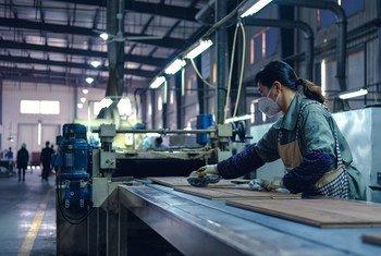 在中国浙江的一个木地板工厂,一名工人正在清洁成品。