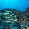 समुद्र सम्बन्धी आर्थिक गतिविधियों की वार्षिक वैश्विक क़ीमत, 1.5 खरब डॉलर से भी ज़्यादा आँकी गई है.