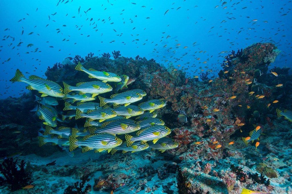Des milliards de personnes dans le monde dépendent des océans pour leurs moyens de subsistance.