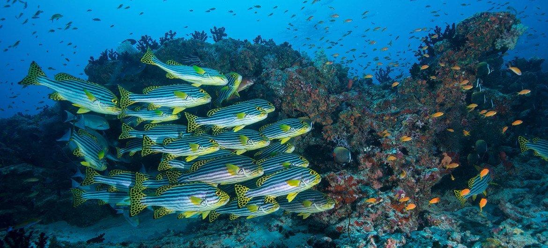 Океан - это дом для подавляющего большинства флоры и фауны планеты.