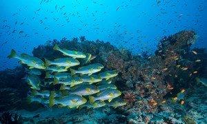 """Este ano, o tema é """"O Oceano: Vida e Subsistências"""" para marcar a importância dos oceanos para a vida cultural e a sobrevivência econômica de comunidades em todo o mundo"""