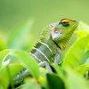 La ONU pide una actuación valiente para proteger la biodiversidad del mundo.