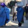 В ООН предупреждают о том, что почти треть афганцев в ближайшее время столкнутся с дефицитом продовольствия на фоне засухи и роста внутренней миграции.