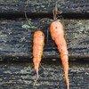 Некрасивые на вид овощи и фрукты, которые часто оказываются на помойке, ничуть не хуже по качеству и  вкусу
