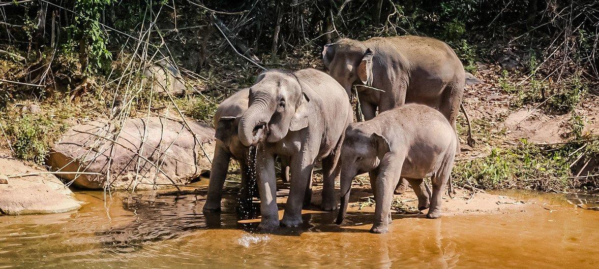 Ten new migratory species protected under global wildlife ...
