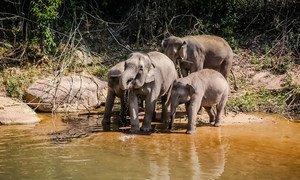 Elephants bathing in Chiang Mai, Thailand.