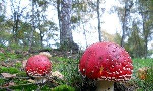 La seguridad alimentaria y medios de susbsistencia de millones de personas dependen de los bosques.