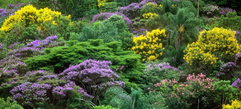 Los bosques son los hábitats mas diversos en tierra.