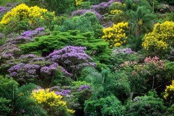 В лесах произрастают 60 тысяч видов деревьев.