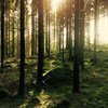 La forêt d'Hästhult en Suède