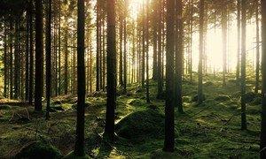 O Pnuma afirma que as árvores são, sem dúvida, um investimento inteligente para manter a temperatura do planeta na medida certa, absorver o dióxido de carbono e filtrar a poluição do ar.