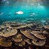 El arrecife de Coral en Australia es el sistema coralífero más grande del mundo.
