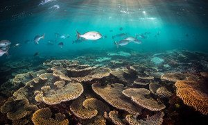 The Great Barrier Reef in Australia is the world's largest coral reef system.