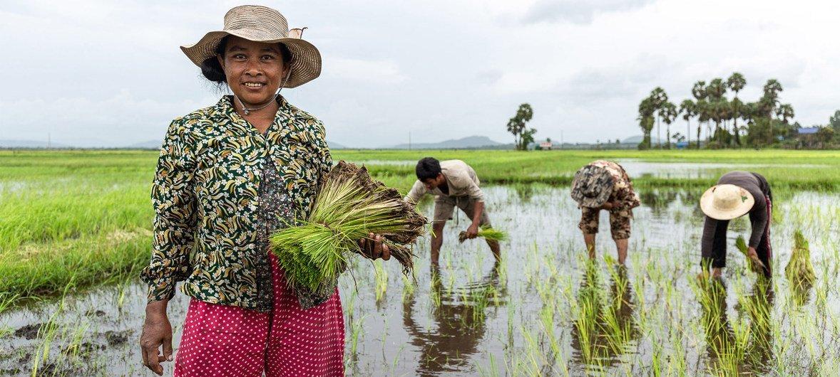 柬埔寨正面临旱季延长、雨季缩短,降雨量过于集中等气候水文挑战。联合国开发署及最不发达国家基金正努力帮助该国完善早期预警系统。