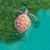 Человеческая деятельность приводит к разрушению морских экосистем, предупреждают в ООН.