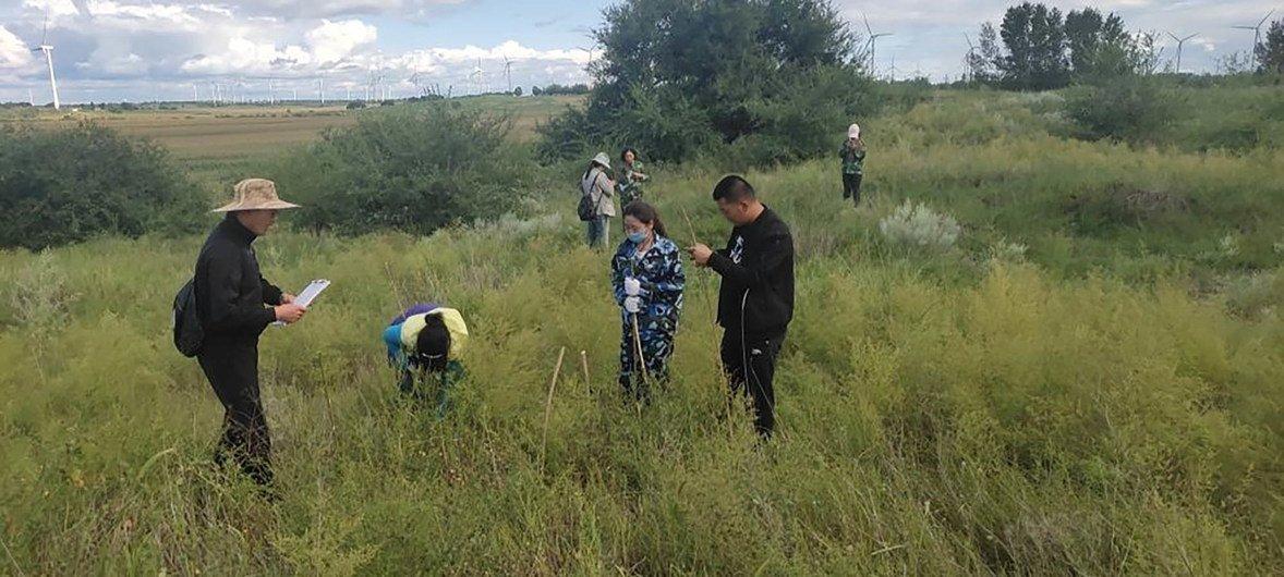 通榆县环保志愿者协会在做温带草原生态修复工作