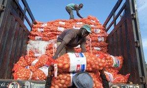 马里首都巴马科,工人正从卡车上卸下洋葱。(资料图片)