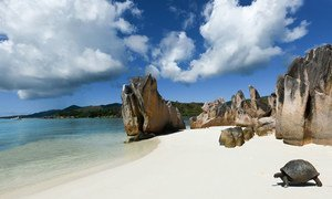 A giant tortoise makes its way to the water's edge on a beach on Curieuse Island, a Seychelles National Park.