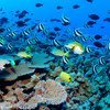 Reef fish and corals in the waters of the Seychelles archipelago.