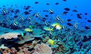 塞舌尔群岛水域中的礁鱼和珊瑚。