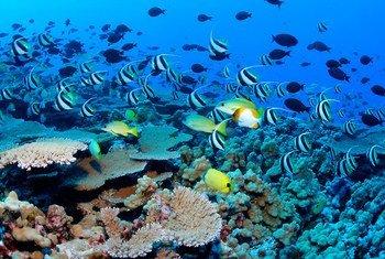Os microplásticos estão sufocando os oceanos e também prejudicando a vida humana, porque são consumidos por quem come frutos do mar
