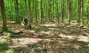 क्रोएशिया के एक जंगल में क्लस्टर गोला-बारूद को हटाया जा रहा है.