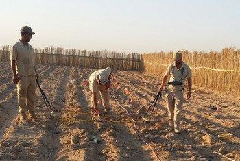 Un equipo de expertos en limpieza de minas busca bombas de racimo en un campo arado de Iraq.