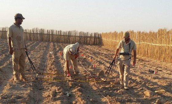A team of clearance experts searches for cluster bombs in a ploughed field in Iraq.