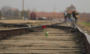 波兰奥斯威辛-比克瑙纪念和博物馆的铁轨上放着一朵玫瑰。