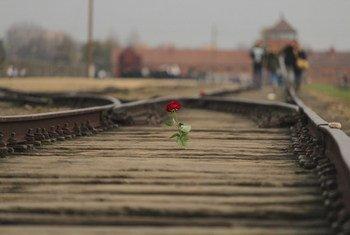 Une rose a été placée sur le rail du site d'Auschwitz-Birkenau, en Pologne.
