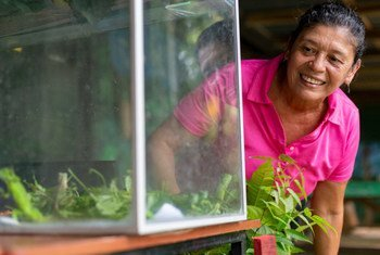 Mayra Monge has dedicated much of her life to researching and planting native trees in the verdant biodiverse powerhouse of Costa Rica.