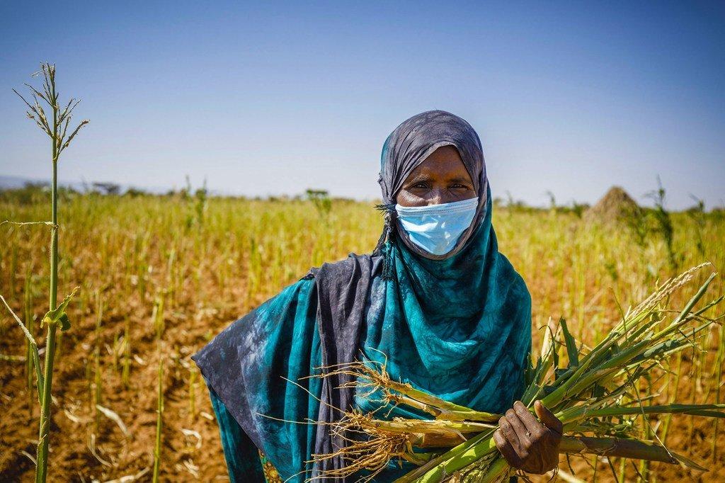 Les systèmes alimentaires en Afrique ont subi les effets néfastes des chocs climatiques, des conflits et, plus récemment, de la Covid-19.