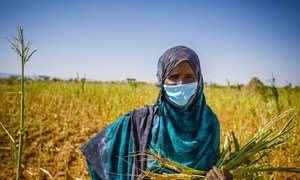 Food systems in Africa have been adversely impacted by climate-induced shocks, conflicts and most-recently, COVID-19.