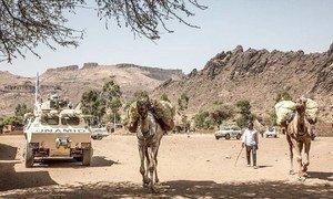 Agência das Nações Unidas para Refugiados, Acnur, revelou que a violência étnica terá afetado cerca de 20 mil pessoas, a maioria mulheres e crianças.