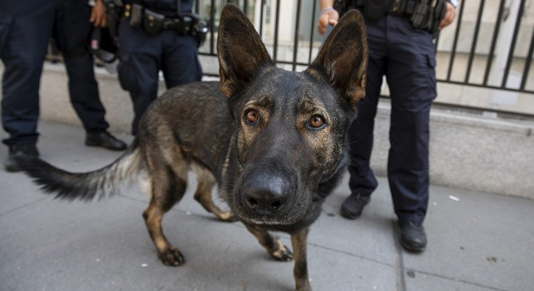 A hard-working member of the UN Security canine unit and colleagues on First Avenue outside UN Headquarters.