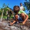 استعادة الموائل الطبيعية، كما يظهر في الصورة من كوبا، سيساعد على إبطاء التغير المناخي.