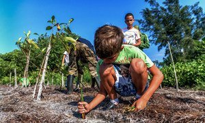 Restoring natural habitats as pictured here in Cuba will help to slow down climate change