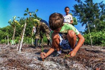 यहाँ चित्रित प्राकृतिक आवासों को बहाल करने से क्यूबा में जलवायु परिवर्तन को धीमा करने में मदद मिलेगी.