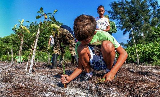 Projeto em Cuba, apoiado pela ONU, de recuperação de solos, Pnud