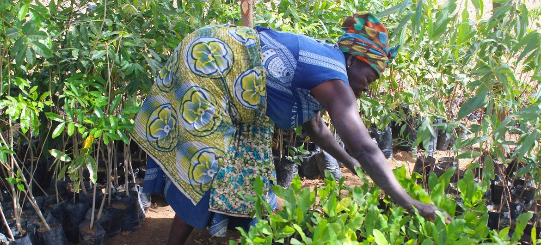 Donner aux femmes les moyens de s'adapter aux effets du changement climatique est bénéfique. Dans tout le Ghana, les femmes apprennent à transformer leurs récoltes en produits alimentaires qui peuvent être vendus sur les marchés.