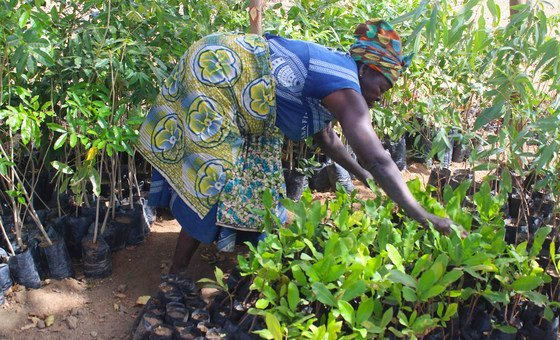 Women across Ghana are learning how to process their crops into food stuffs that can be sold in markets.