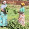 Deux femmes agricultrices au Ghana
