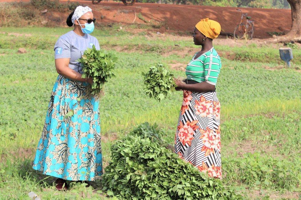 45 pays, dont 34 en Afrique, auront besoin d'une aide alimentaire extérieure (FAO)