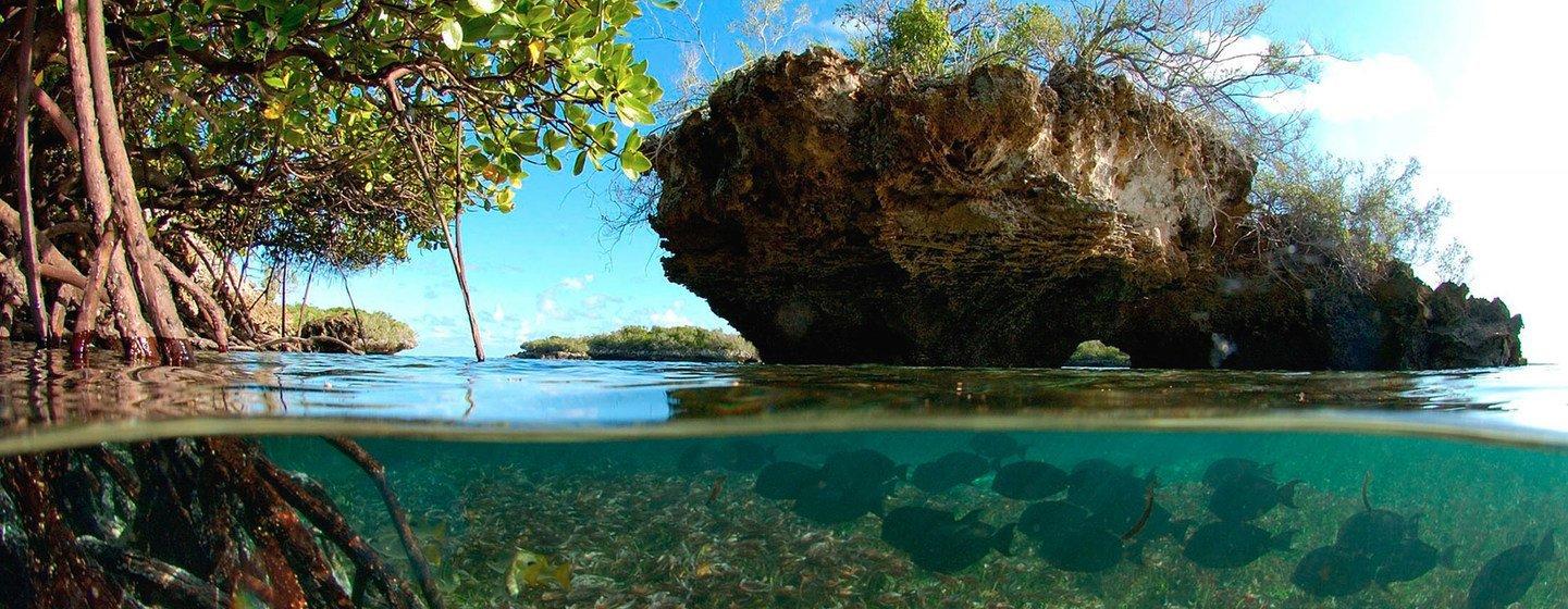 El atolón de Aldabra en las islas Seychelles hace parte del Patrimonio Mundial de la UNESCO.