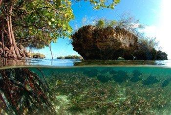 L'atoll d'Aldabra, un site du patrimoine mondial de l'UNESCO aux Seychelles