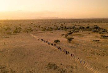 移民正步行穿越吉布提境内的沙漠地带。