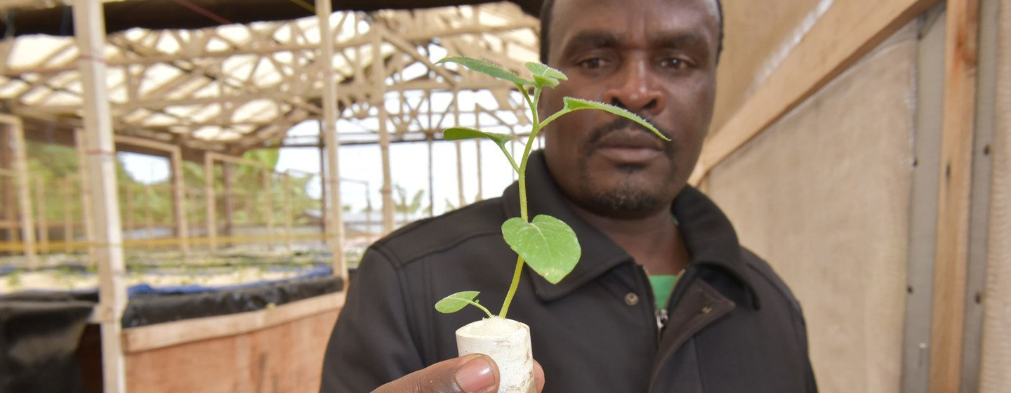 Growing potatoes in the air: agricultural innovation in Rwanda